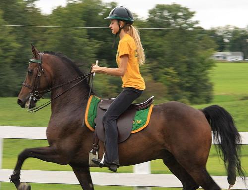 Техник-животновъд – Коневъдство и конна езда