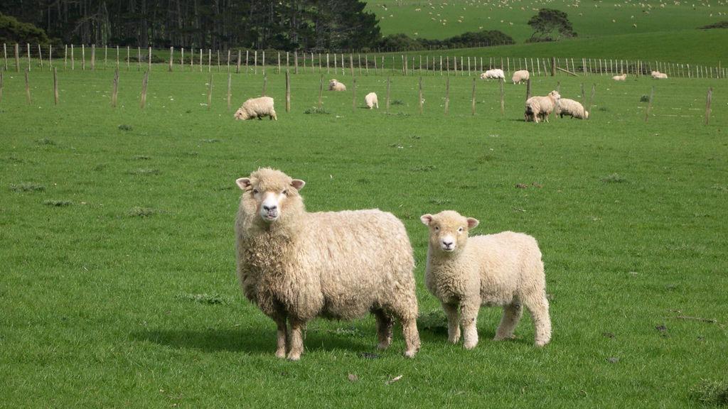 ovcevudstvo