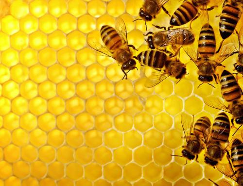 Техник-животновъд – Пчеларство и Бубарство